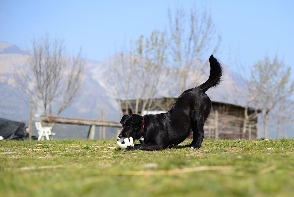 Sofia e la palla