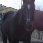Elian del rifugio del cavallo