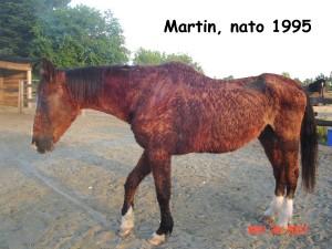 Martin arriva in queste condizioni al Rifugio