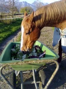 Aqui Cour mangia l'insalata