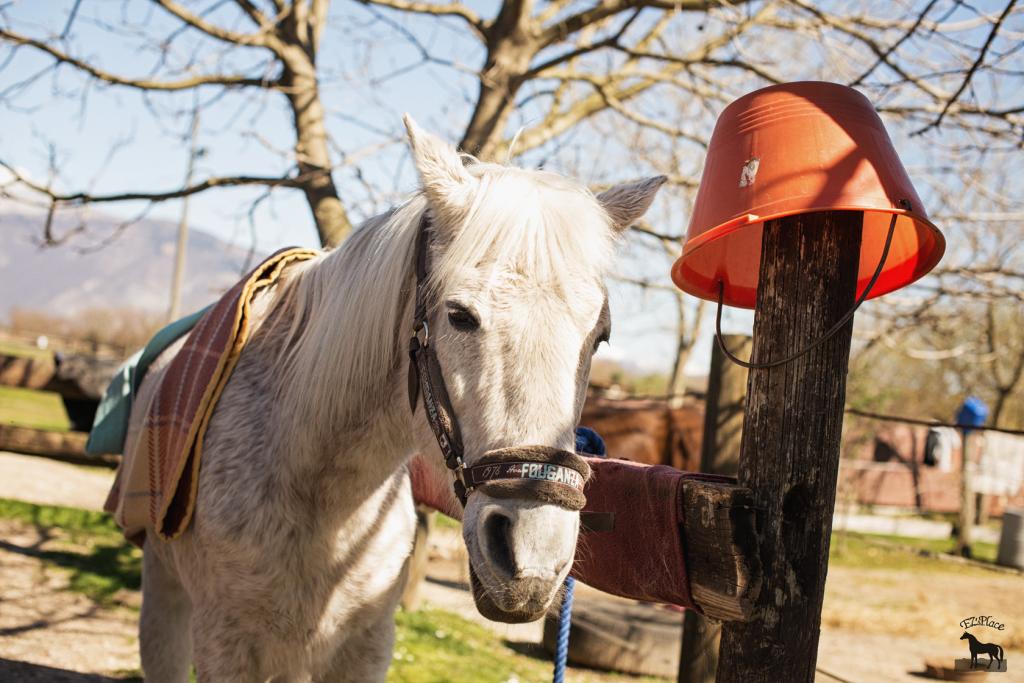 Billly del Rifugio del Cavallo