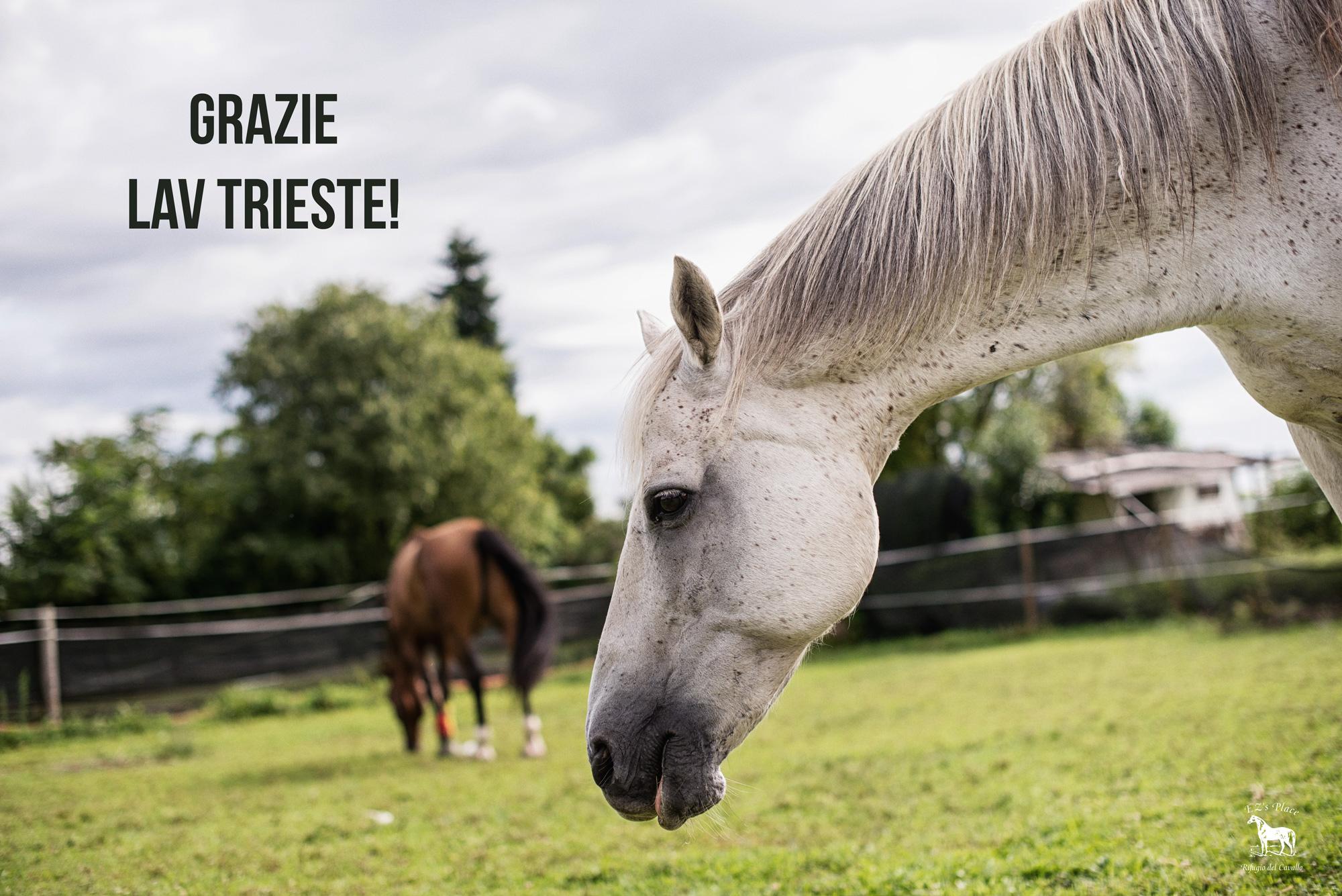 Lucky ringrazia LAV Trieste!